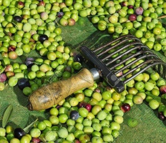 olives spain e