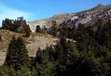 sierra nieves