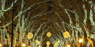 Christmas Palma