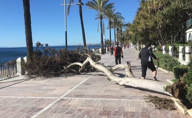 fallen tree marbella