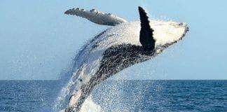 whalee e