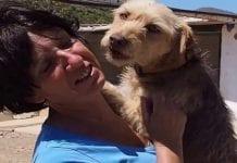 Kims Animal Rescue Raided e