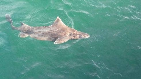 IN PICS: Rare shark spotted off coast of southern Spain