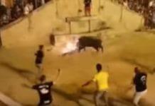 bull fire