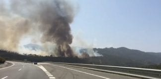 forest fire cadiz