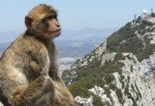 monkey e