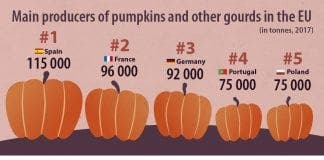 Top pumpkin producers