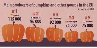 Top  pumpkin producers