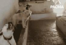 dogs cordoba