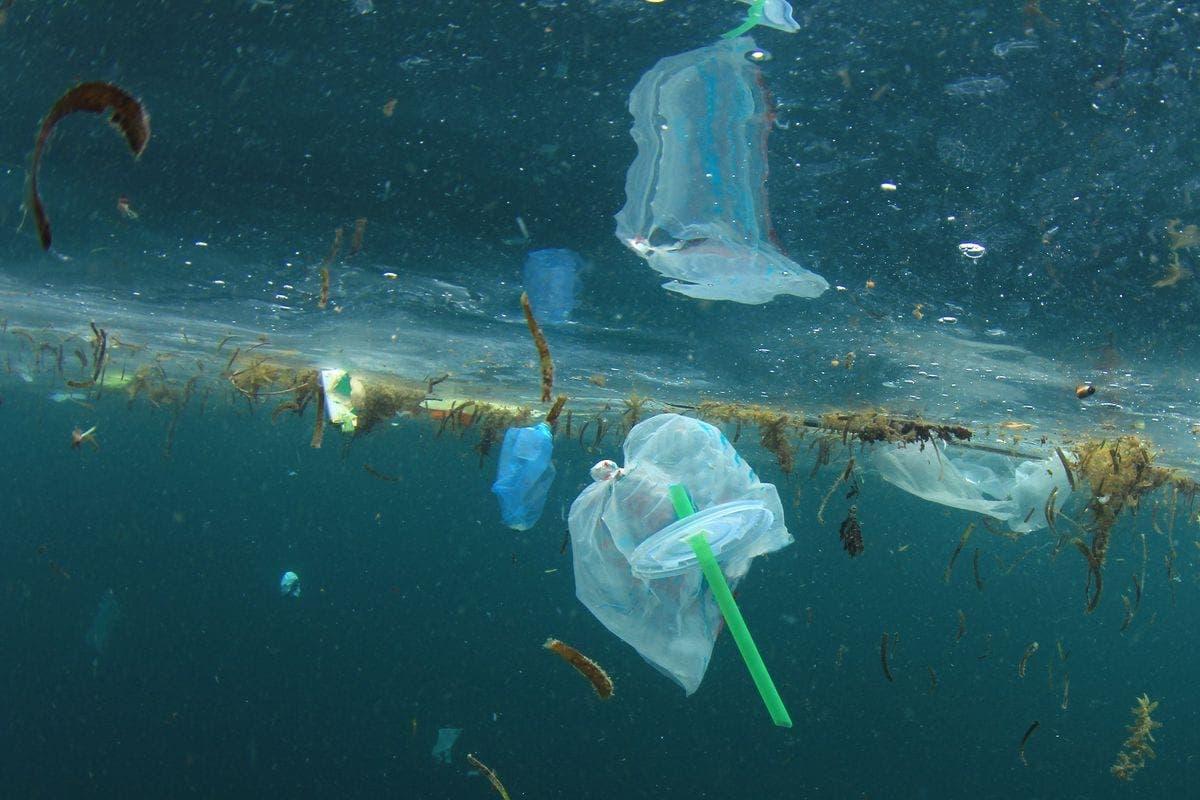 straws ocean