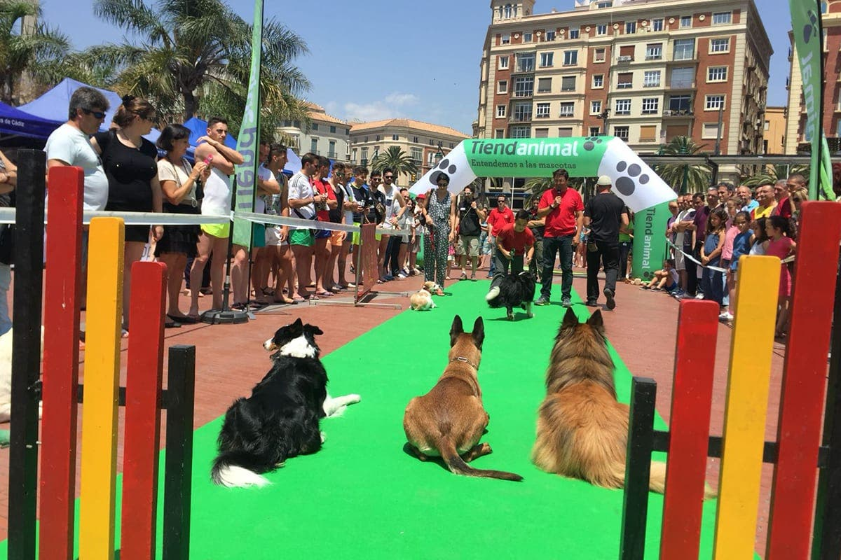 the plaza Doggy party on