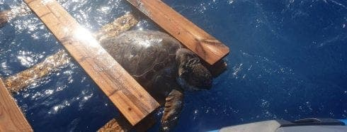 Dead turtle trapped in wooden pallet found off Spain's Costa Blanca