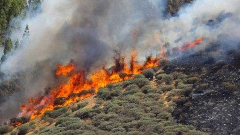 Wildfires in Spain's Gran Canaria declared 'unstoppable' as 8,000 evacuated