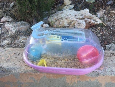Hamsters Dumped By Bin