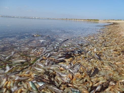 WATCH: Gota fria has left Mar Menor in environmental crisis after THREE TONNES of dead fish pulled from waters in Spain's Murcia