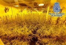 Marijuana Mijas