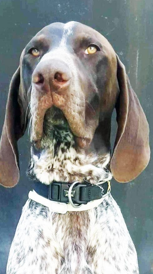 Costa Blanca canine crowned 'the most beautiful dog in Spain'