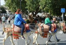 Mijas Donkey Generic