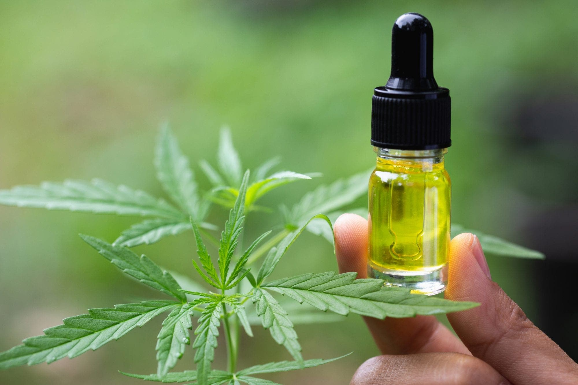 The Cbd Oil Vs Cbd Tincture: What's The Difference? Diaries