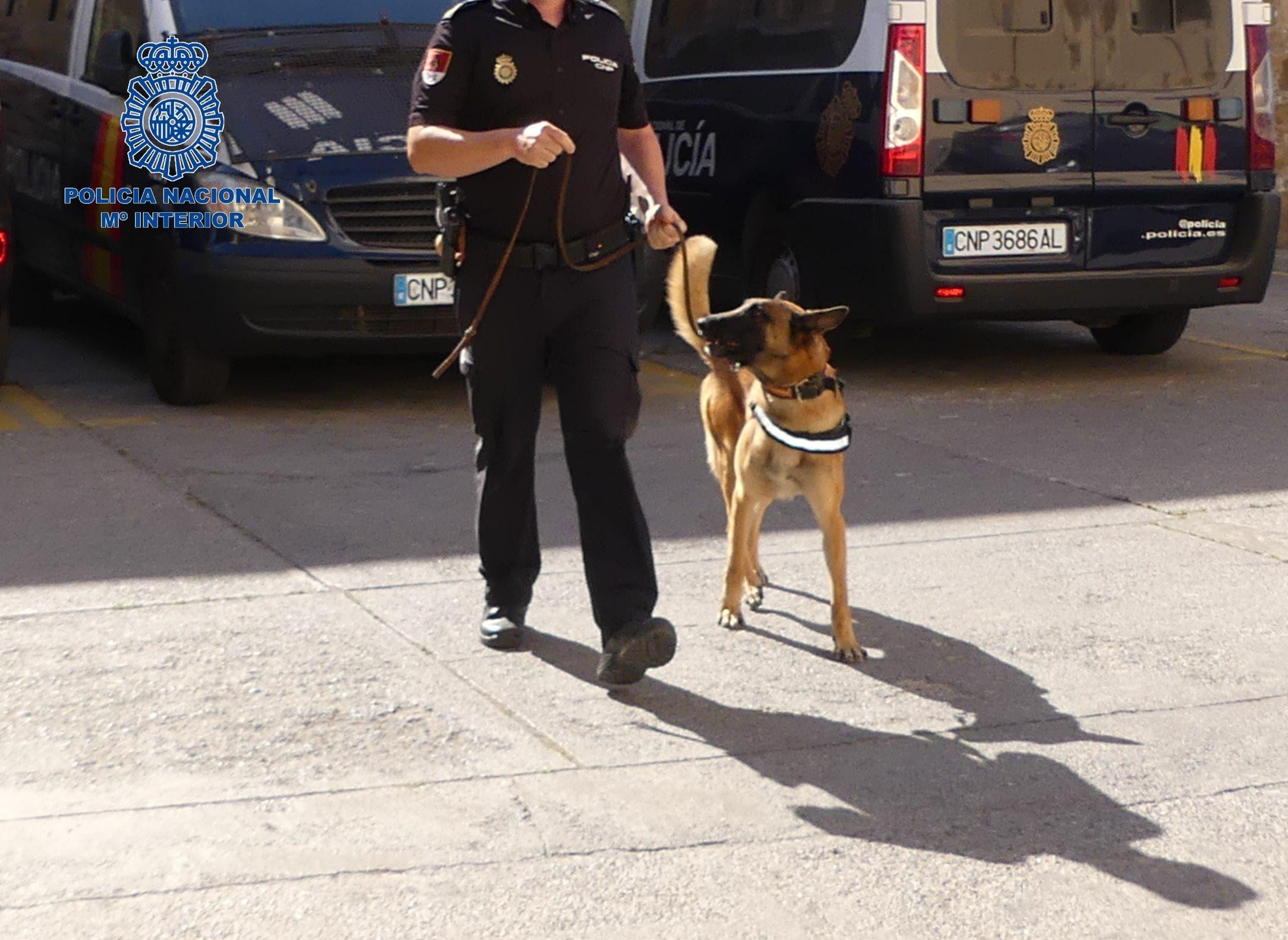 Policia Nacional Dog
