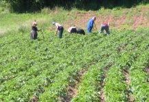 Farm Spain