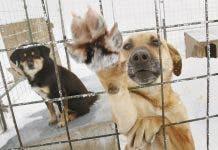 Pets Spain