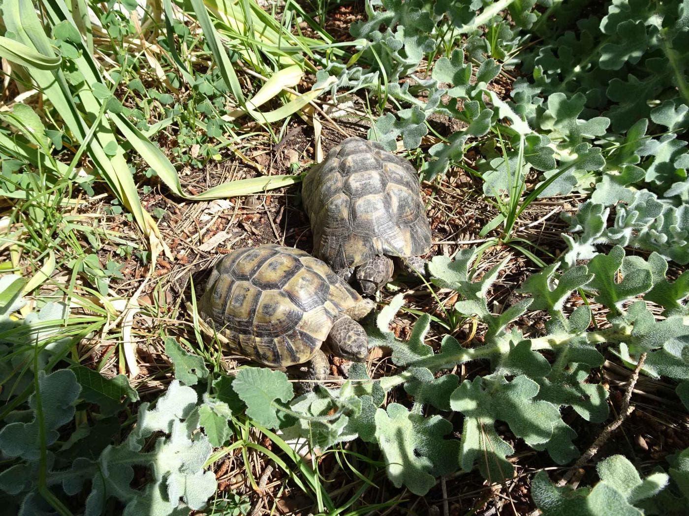 Stolen Turtles