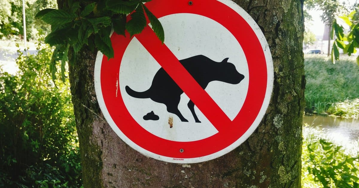 No Dog Feces Signboard On Tree Outdoors