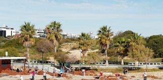 Fotos Limpieza Playas Orihuela Costa