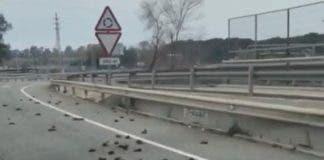 Birds Dead