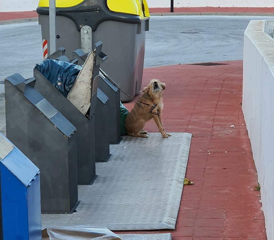 Dog Dumped 2
