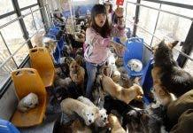 Pets Bus