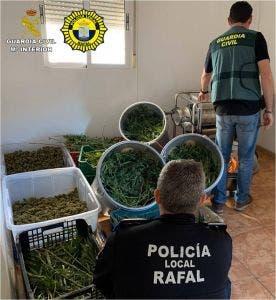 Rafal Hash Farm 2