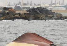 Huelva Sucesos Fallecen Dos De Los Marineros Rescatados Del Pesquero Naufragado En Punta Umbr A