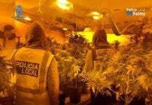Mallorca marijuana