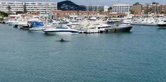 Dolphin Mallorca