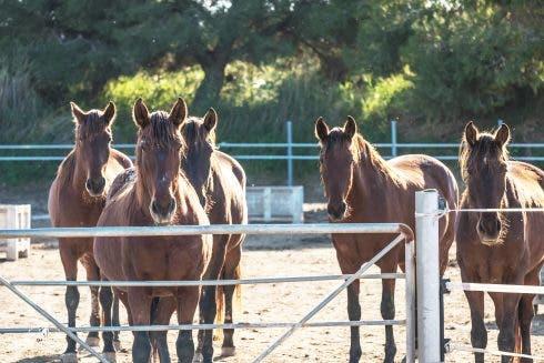 Ehcrc Horse 2