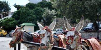 La Cala De Mijas Donkeys In Mijas