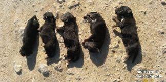 Puppies Cadiz
