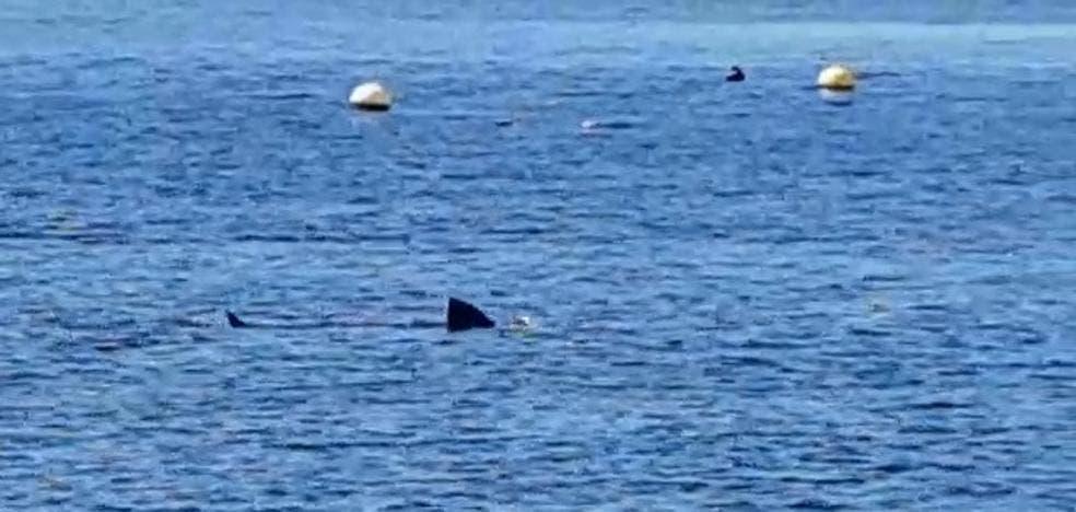 Shark Calahonda