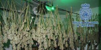Weed Granada