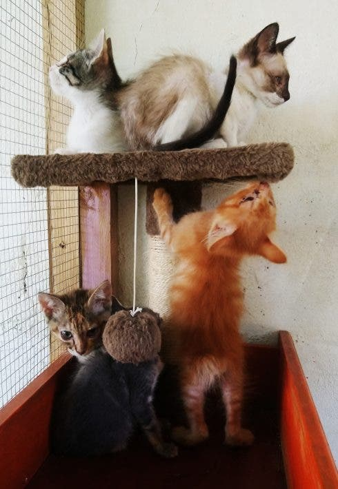 Animal Rescue 3