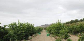 Campo Limones 960x640
