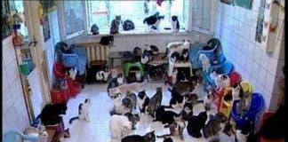 Cat Noah Syndrome