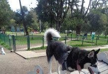 450px Dog_park_at_parque_la_carolina _photo Aa 5