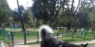 450px Dog_park_at_parque_la_carolina _photo Aa 5