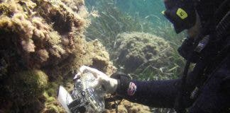 Coral Reefs Are Dying Due To Global Warming In Waters Of Spain S Costa Blanca