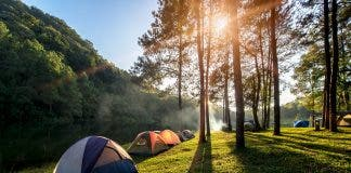Adventures Camping And Tent Under The Pine Forest Near Water Outdoor In Morning And Sunset At Pang Ung Pine Forest Park