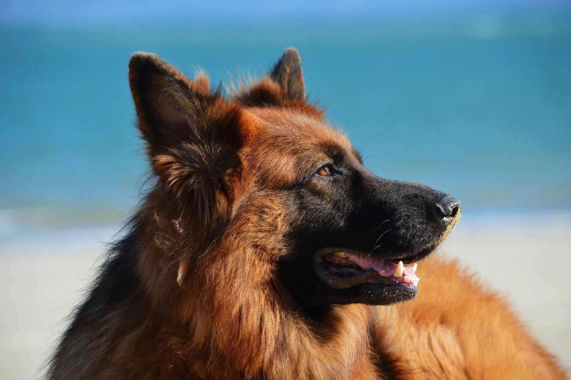Dog 1209914_1920