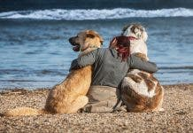 Dogs 4220163_1920